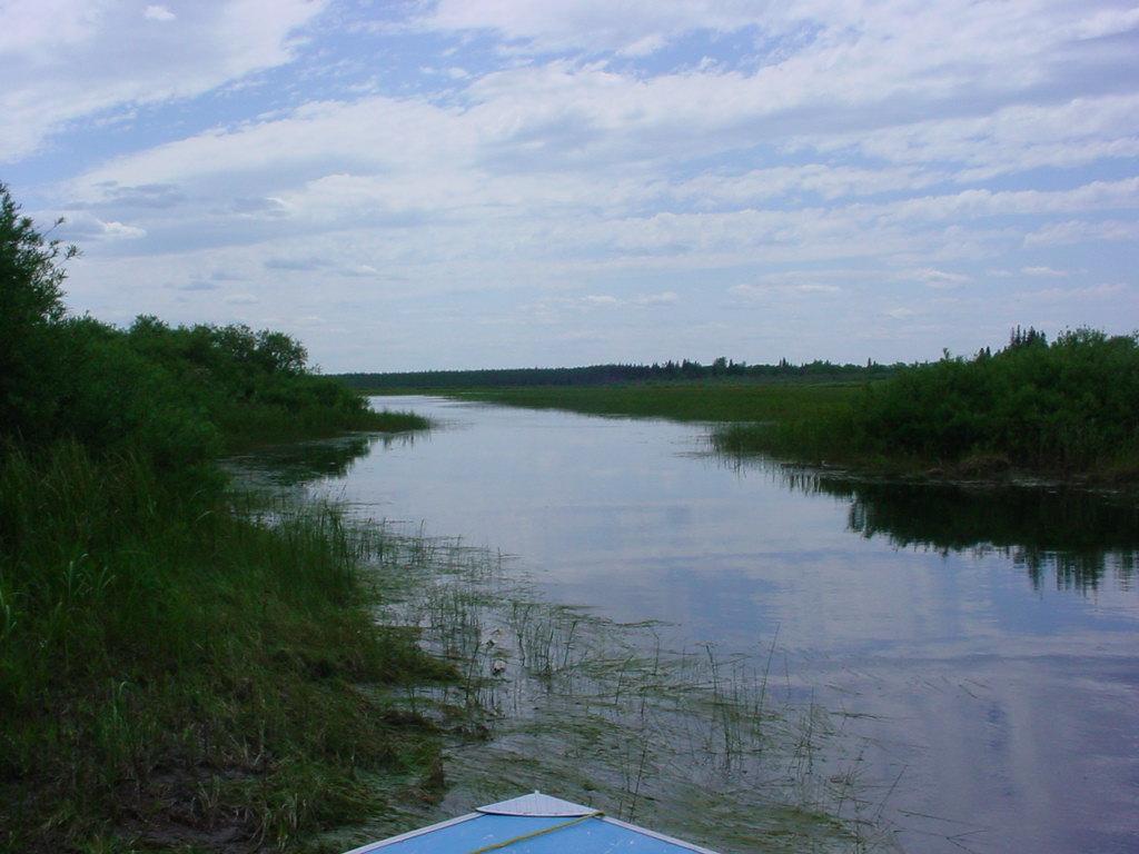 marsh lambert