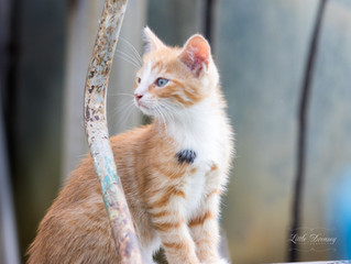 Kiisupildid MTÜ Cats Help heaks