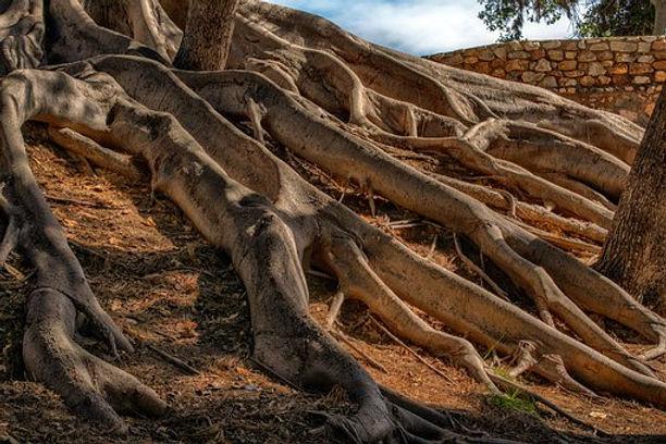 roots-4916080__340.jpg