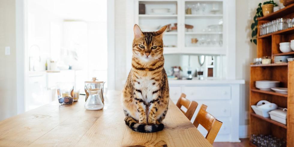Charla: ¿Cómo alimentar a tu gatito?