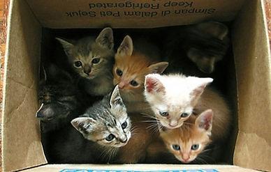 kittens_p2118671.jpg