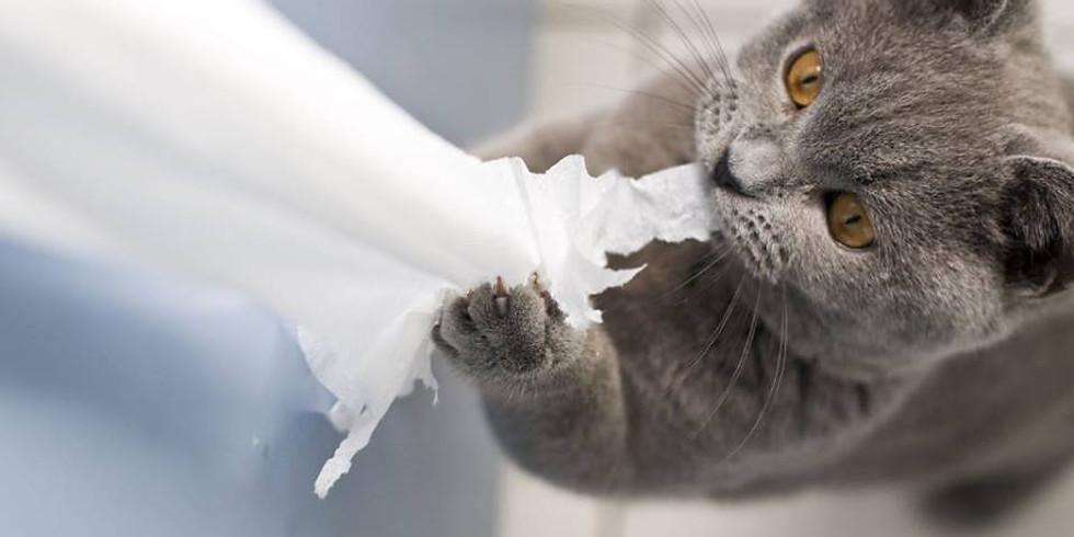 Signos de estrés en el gato, prevención y manejo