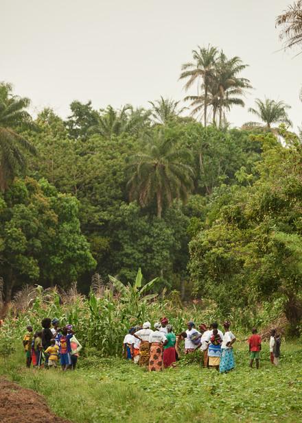 Singing and collecting plants, Modiya