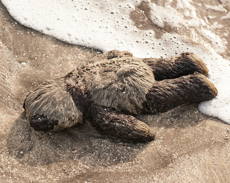Teddy bear washed ashore in Guinea