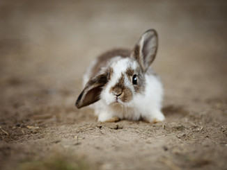 rabbit-4890861_1920.jpg