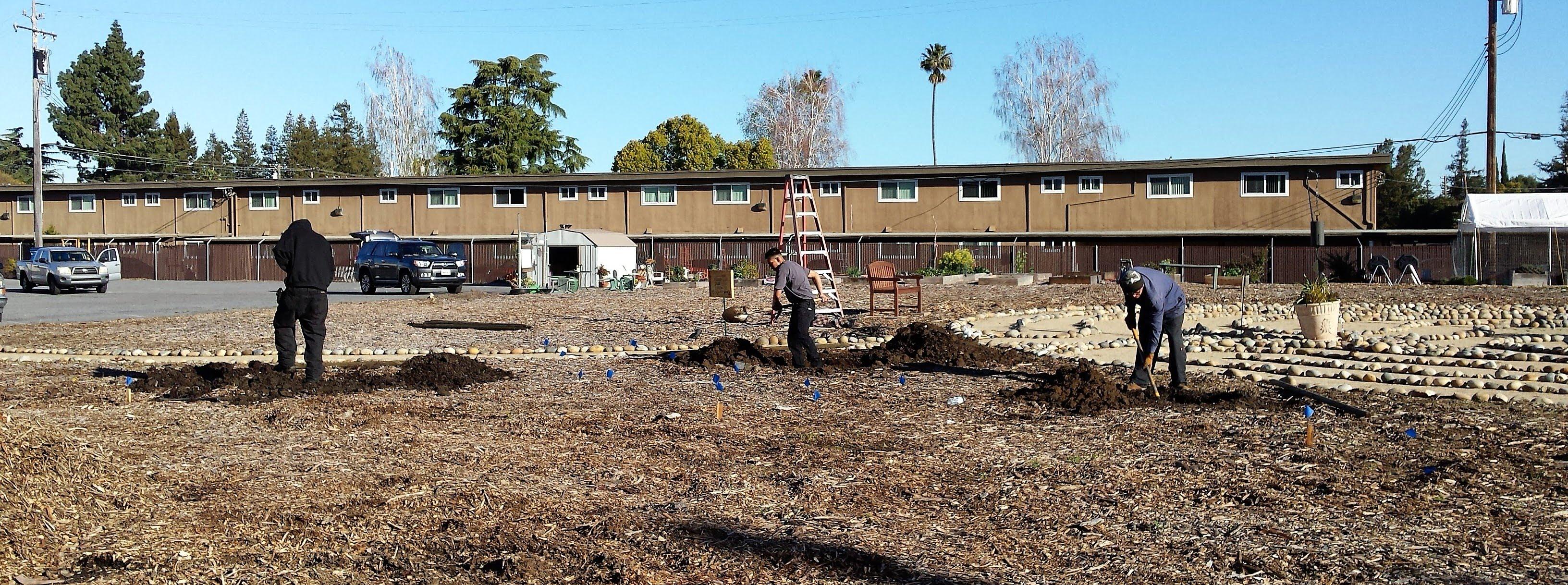 3.13.19 tree planting (5)
