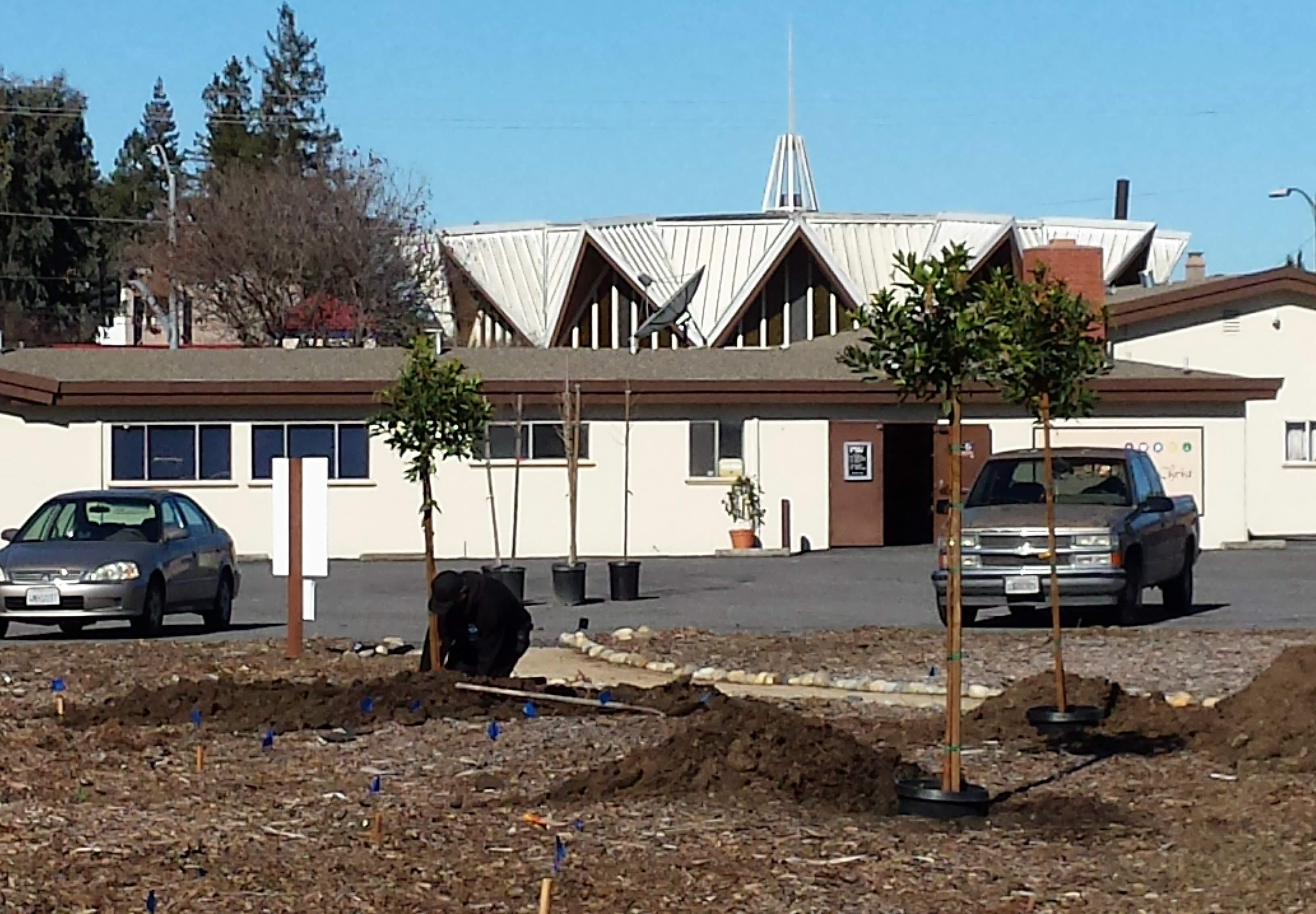 3.13.19 tree planting (13)
