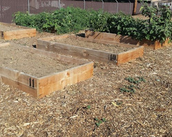 Garden Boxes