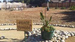Peace Beautiful