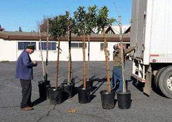 3.13.19 tree planting (8)