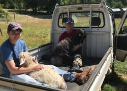 Riley & Farmer Kristi