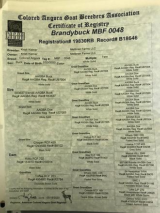Brandybuck Reg.jpg