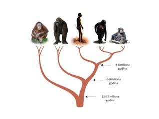 Zašto od majmuna ne može nastati čovek i šta je problematično u ilustraciji evolucije čoveka?