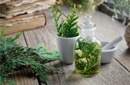 Learn all about Essential Oils and Aromatherapy