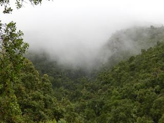 LOS SISTEMAS DE QUEBRADAS: nichos ecológicos que resguardan flora y fauna nativa.