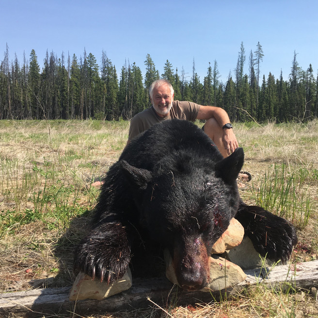 Black Bear Hunting Wicked River Outfitters