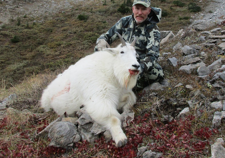 Mountain Goat Hunting British Columbia with Wicked River Outfitters