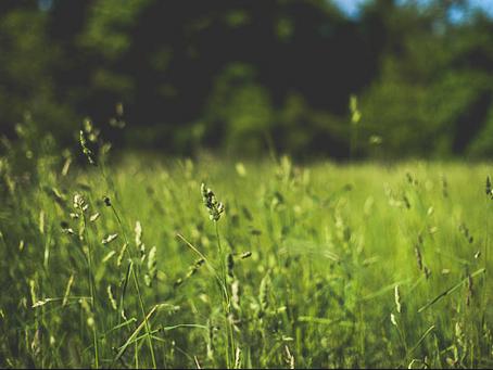 Hay Fever - The seasonal sneezes