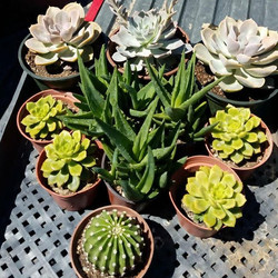 Little succulent arrangement 🌵🌵🌵🌵 that got installed this morning #elitelandscaping #landscaping