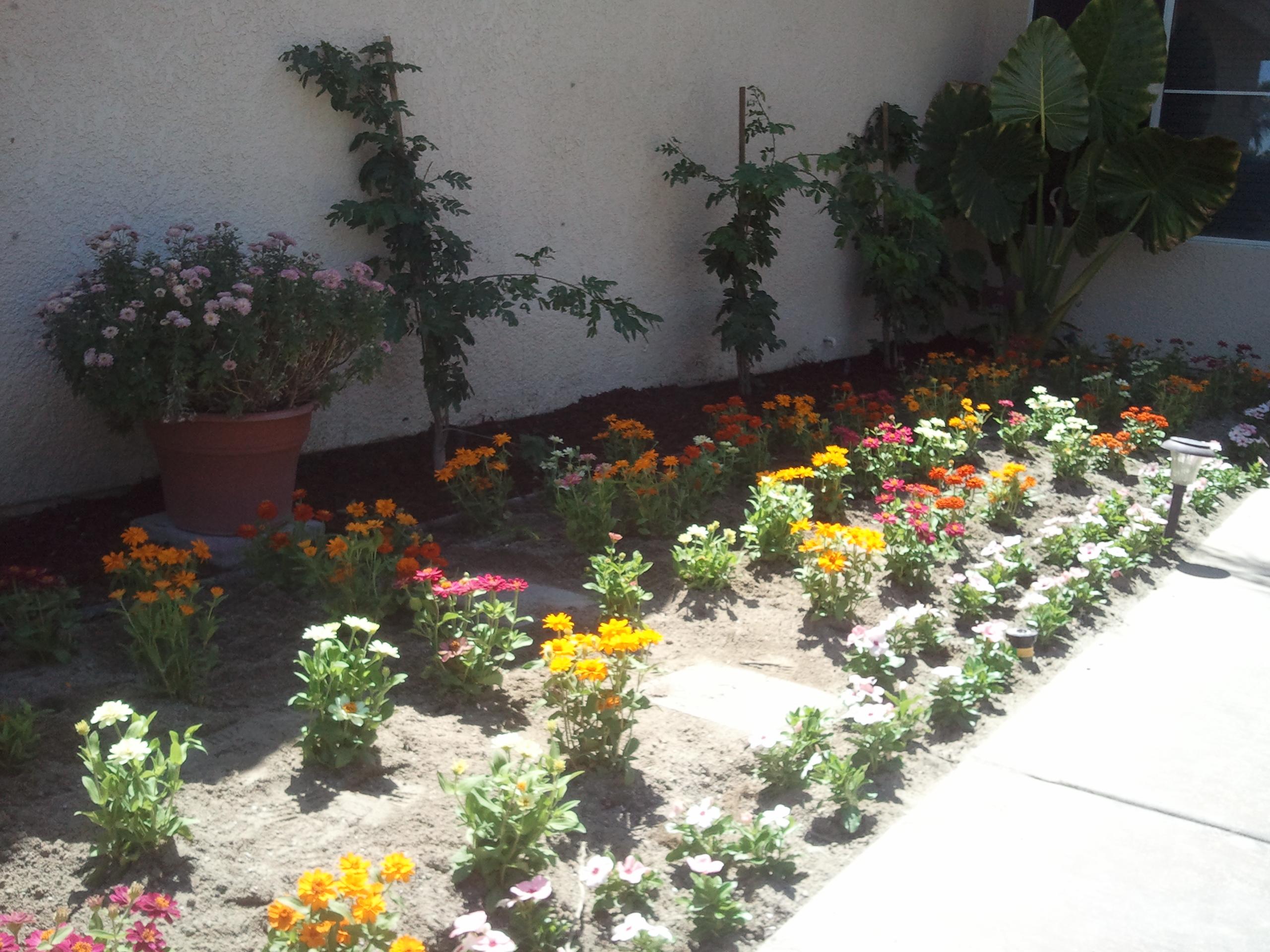 seasonal flower change