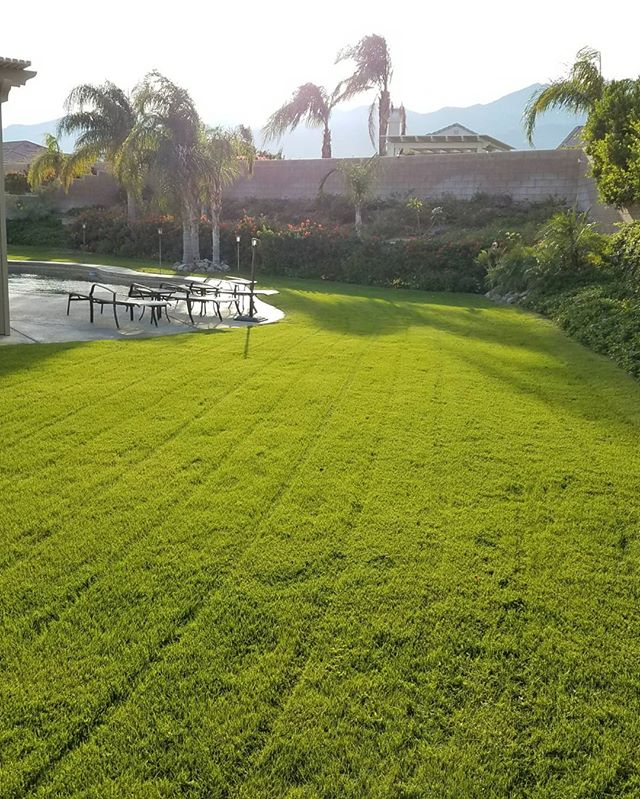 just another beautiful day in the coachella valley and another #elitelawn _#elitelandscaping #elitel