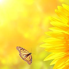 Sunflower%20and%20monarch%20butterflies%