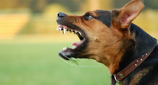 dog-bite-attorney.jpg