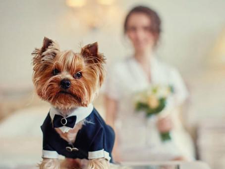 Guia para incluir seu cachorro em seu Casamento