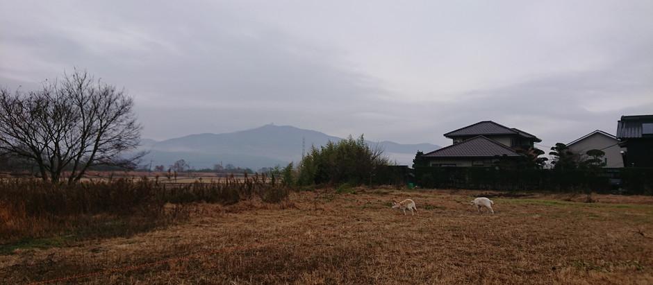 ヤギがいる田園地帯