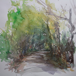 Chemin en forêt de Braconne,_Charente