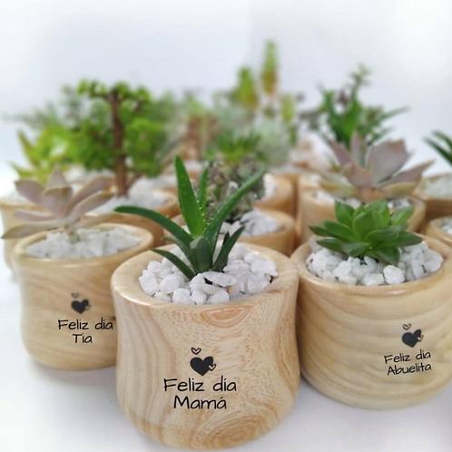 Mini Plantas con Mensajes Personalizados