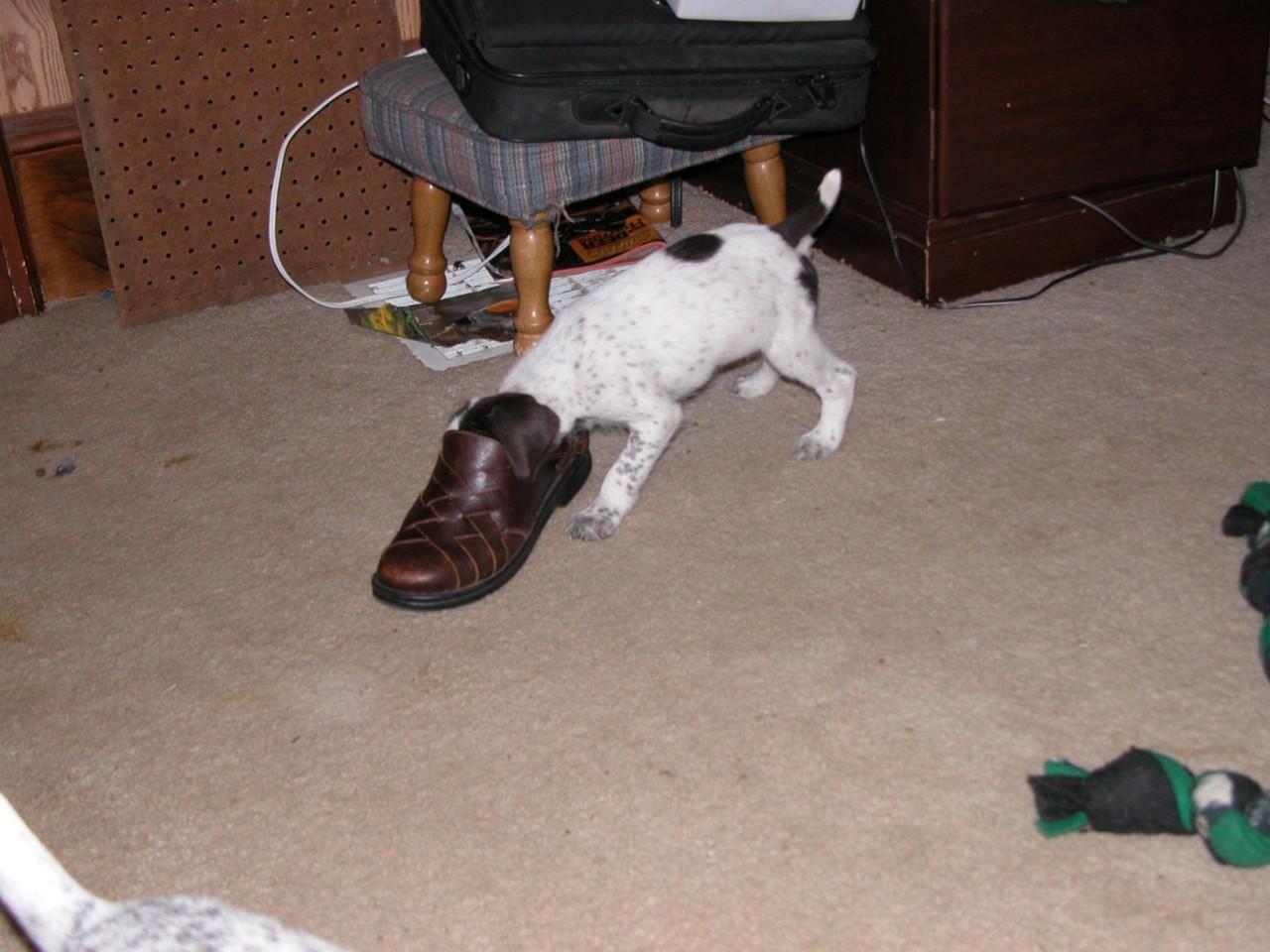 in shoe