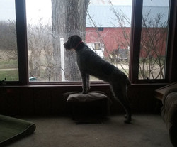 Darby at window