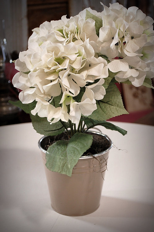 White Hydrangeas - bucket