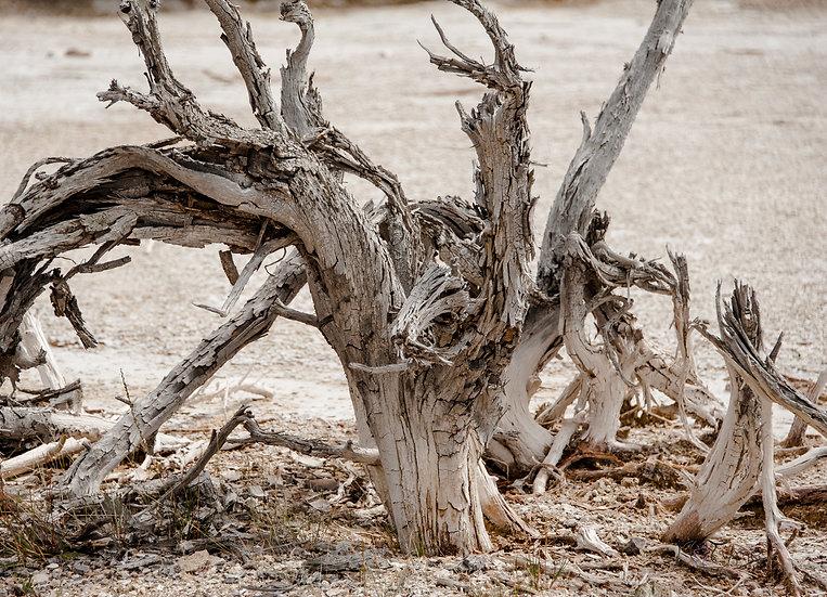 Sulfur Tree