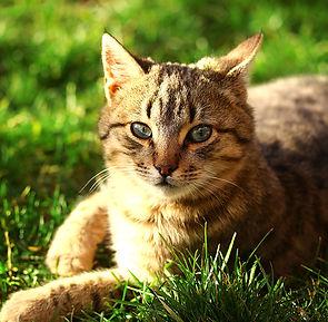 Le meilleur pour votre chat.jpg