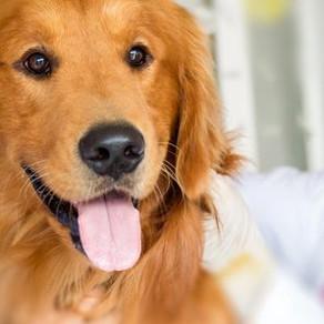 Parásitos, las enfermedades que transmiten a las mascotas