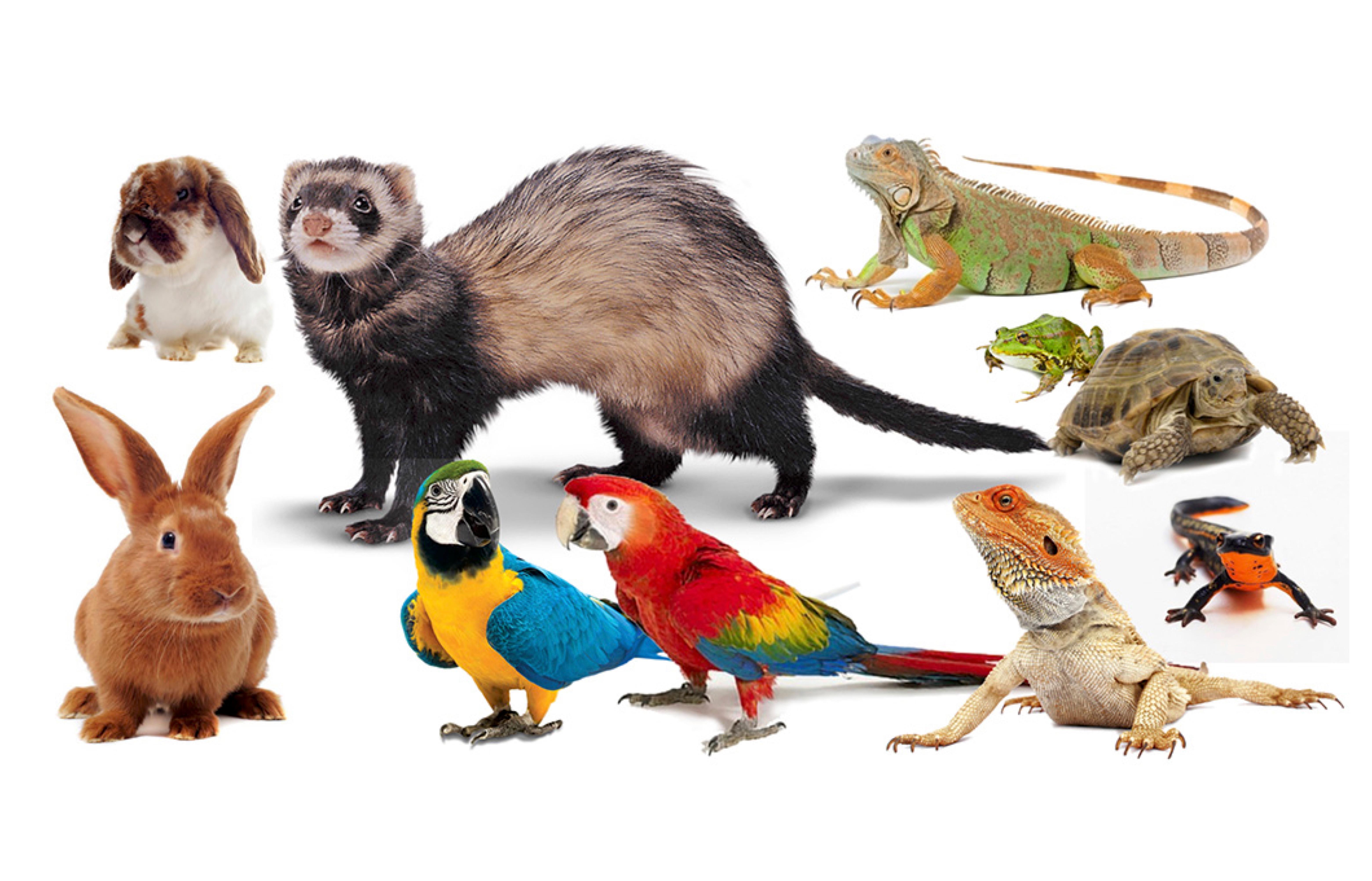 Consultas de Animales Exóticos