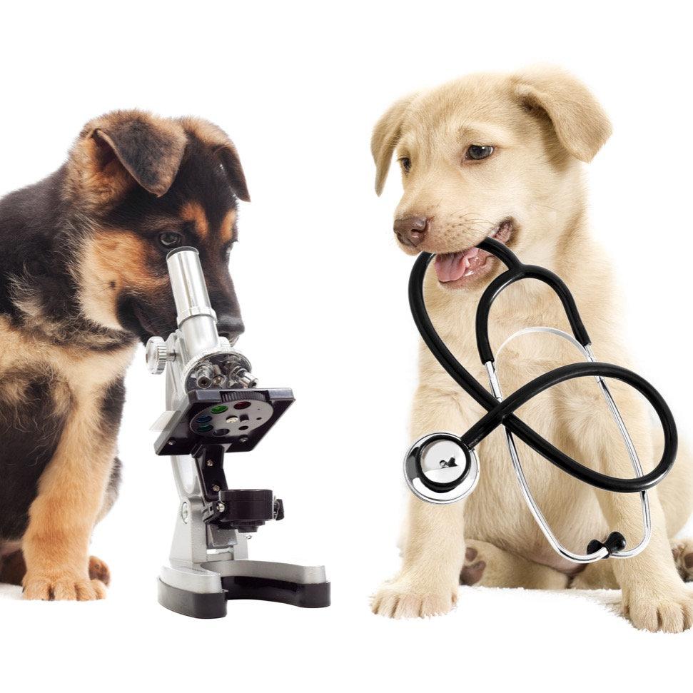 Consultas de Medicina Interna
