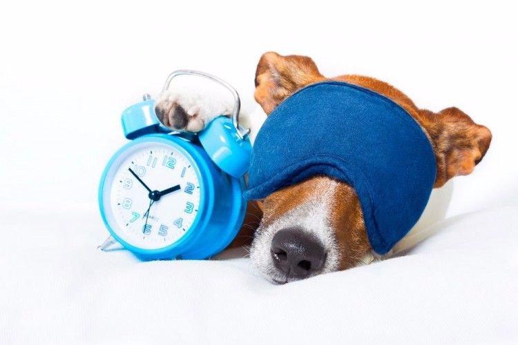 perros-saben-hora-nariz-art_edited.jpg