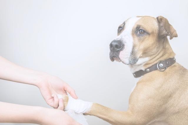 tratamiento-medico-concepto-mascota-vend