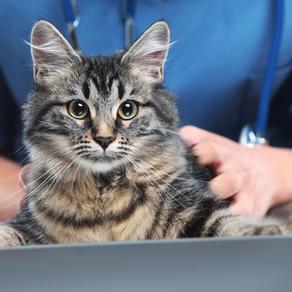 Pautas de vacunación y desparasitación en perros y gatos