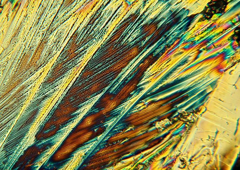 P1010208-1 ureum Focus.jpg