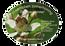 Etiketten voor de Honing