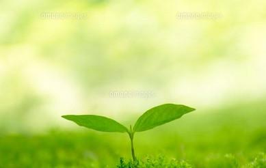 「気づき」から「開花」する黄色い種の13日間のスタートです