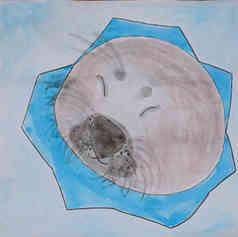 """Illustrated card   """"Saimaa Ringed Seal"""""""