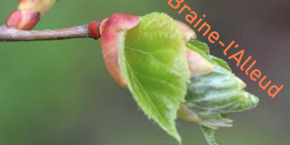 Atelier-conférence - Le sommeil, les plantes et les bourgeons