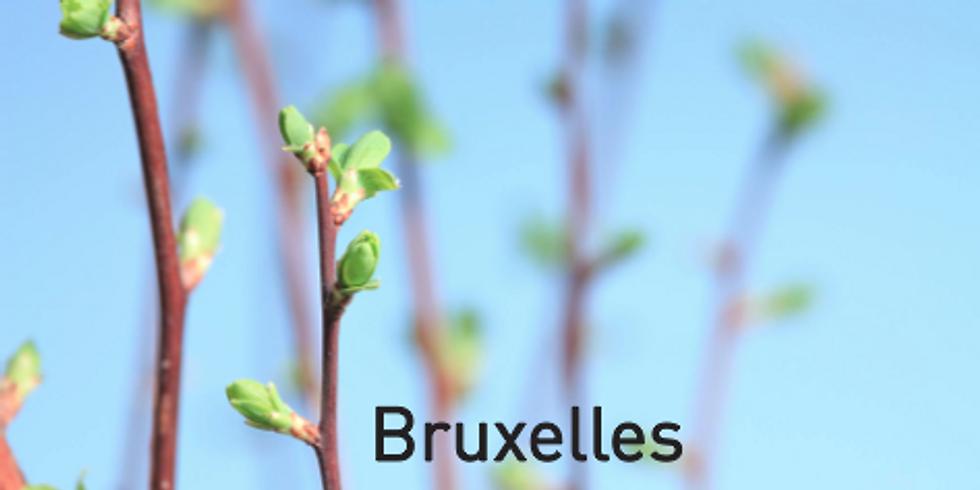 Formation - Se soigner au quotidien avec les plantes et les bourgeons