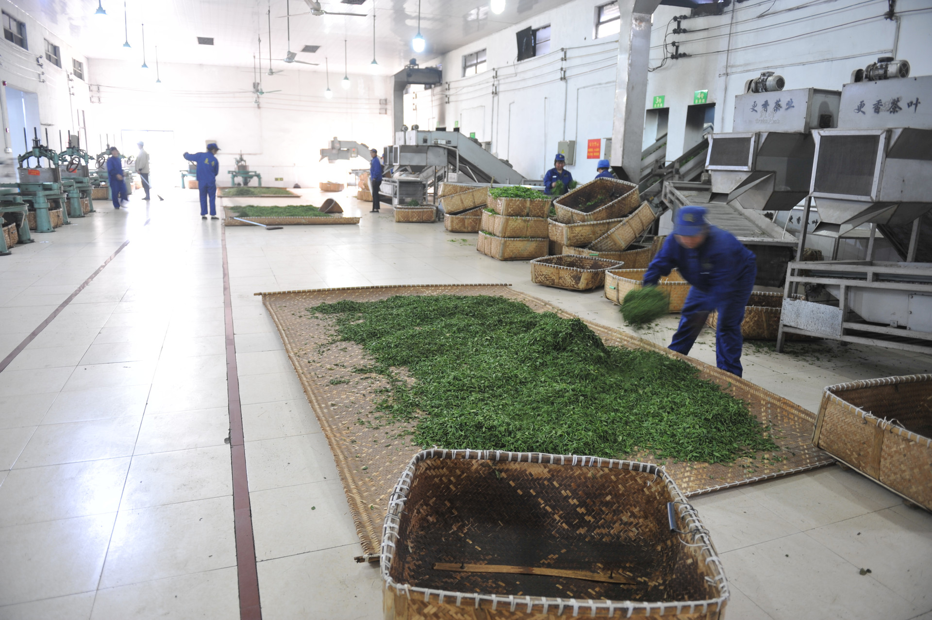 Our Mao Feng Green Tea Factory