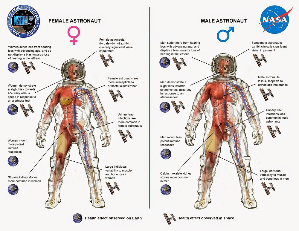 This diagram shows key differences between men and women in cardiovascular, immunologic, sensorimotor, musculoskeletal, and behavioral adaptations to human spaceflight. Image Credit: NASA/NSBRI
